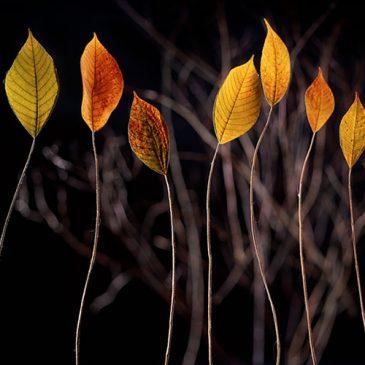 Delight-Filled Leaves, a rebranding of sorts
